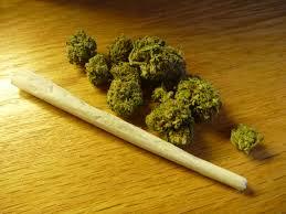 Cannabis Spliff Rolling