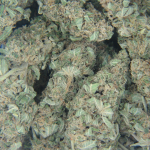 G13 India Weed picture